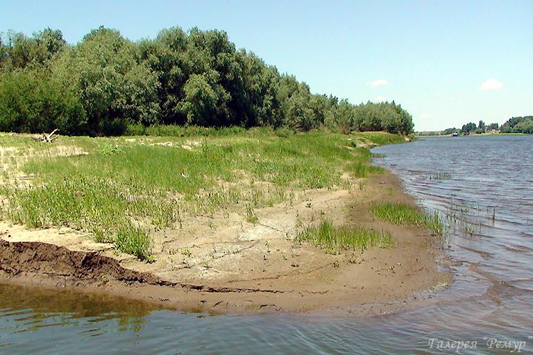 На берегу одной реки 1959  фильмы