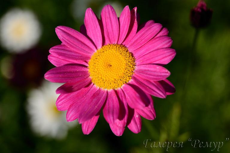 Лекарственные растения травы фото применение описание